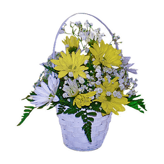 Flower arrangement for all occasions with daisies and baby's breath arranged in a white basket