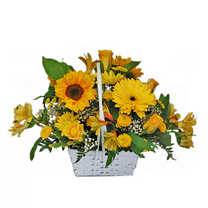 Flower arrangement for All Occasions with sunflowers, gerberas, button poms and more arranged in a handled basket