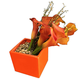 Orange flower arrangement with mini call lilies in a cubed vase