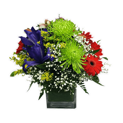 Flower arrangement for any occasion arranged with fuji mums, iris, gerberas and more arranged in cube vase