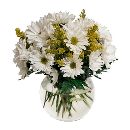 Flower arrangement for all occasions with daisy poms, solidaster and leather fern in glass bubble bowl