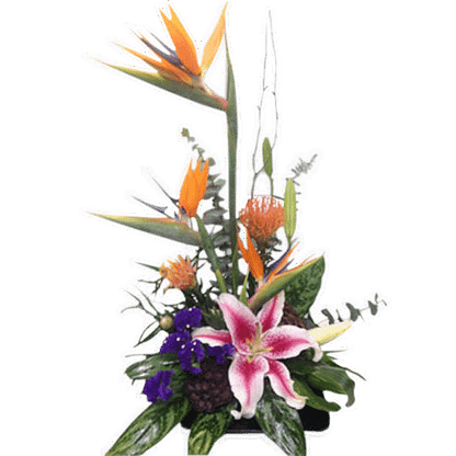 Flower arrangement for any occasion with birds of paradise, pincushion protea, stargazer lily and more, arranged in a contemporary container