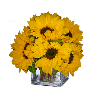 Flower arrangement for All Occasions with sunflowers arranged in a cube vase